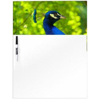 Peacock (Pfau) Dry Erase Whiteboards