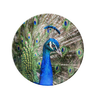 Peacock Plate