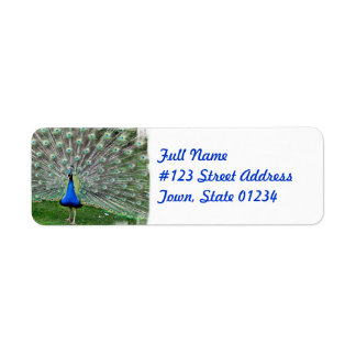 Peacock Plume Mailing Label Return Address Label