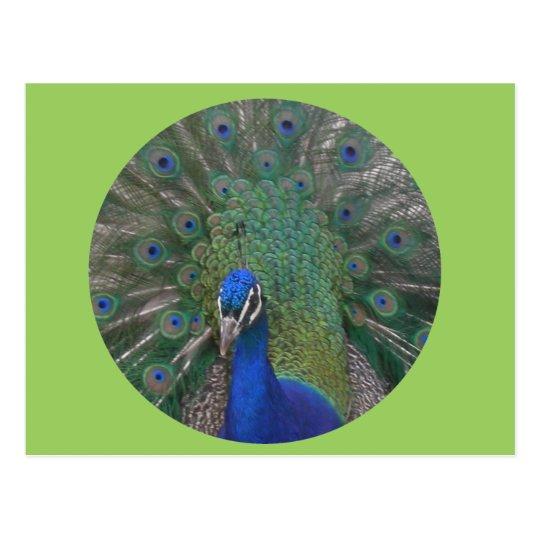 Peacock Postcard Customisable
