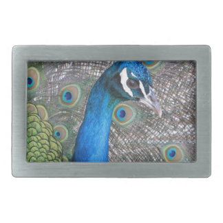 Peacock Rectangular Belt Buckles