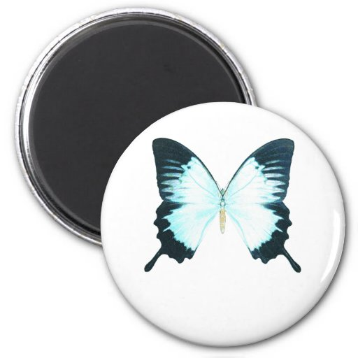 Peacock Royal Butterfly Fridge Magnets
