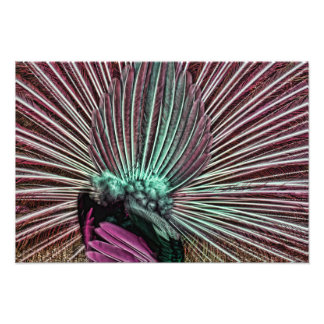 Peacock s Tail - Fabulous Feathers Pink and Green Photograph
