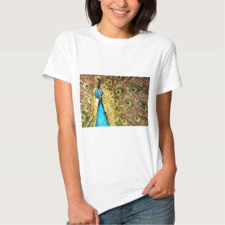 Peacock Shirts