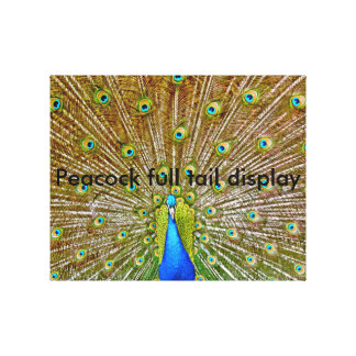 Peacock showing full Tail Display Canvas Print