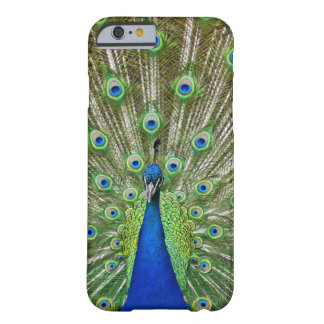 Peacock showing its feathers, as part of a barely there iPhone 6 case