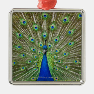 Peacock showing its feathers, as part of a christmas ornament