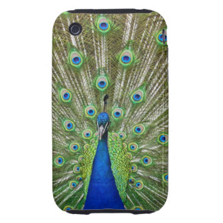 Peacock showing its feathers, as part of a tough iPhone 3 cases