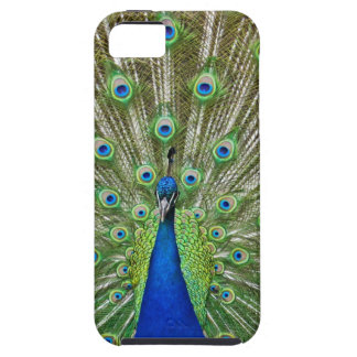 Peacock showing its feathers, as part of a tough iPhone 5 case