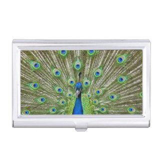 Peacock showing its feathers business card holder