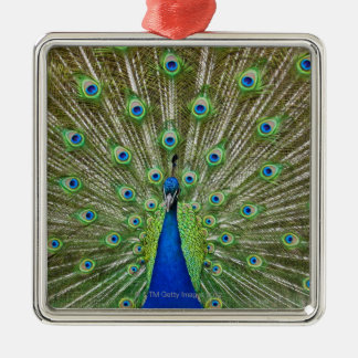 Peacock showing its feathers christmas ornament