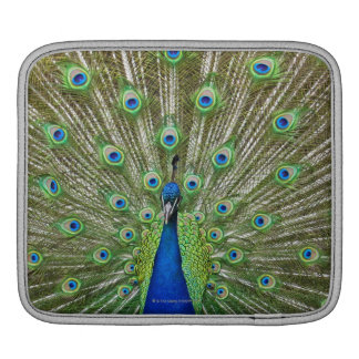 Peacock showing its feathers iPad sleeve
