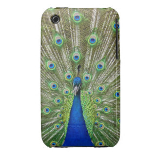Peacock showing its feathers iPhone 3 cases