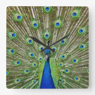 Peacock showing its feathers square wall clock