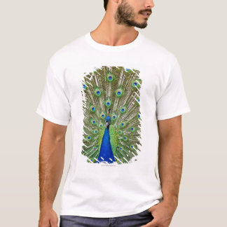 Peacock showing its feathers T-Shirt