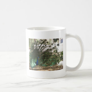 Peacock Showoff Mug