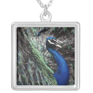 peacock silver plated necklace