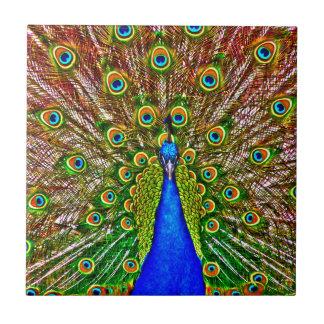 Peacock Small Square Tile