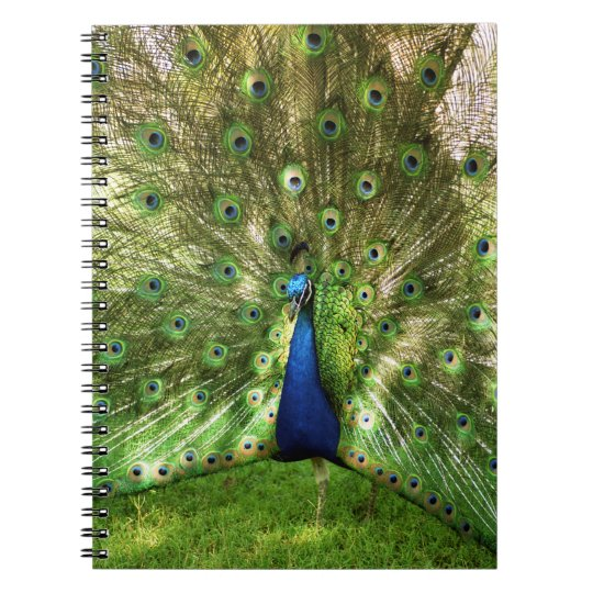 Peacock Spiral Notebook