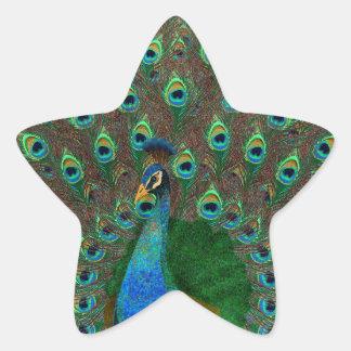 Peacock Star Sticker