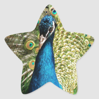 Peacock Star Sticker