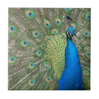 Peacock Strut Small Square Tile