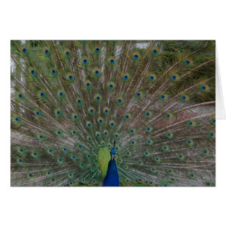 Peacock (Strut Your Stuff) card