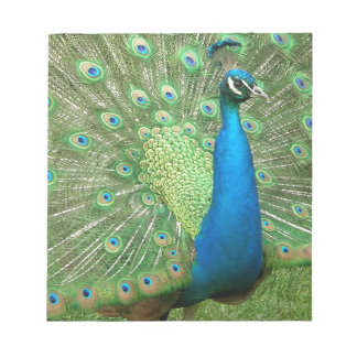 Peacock Strutting His Stuff Notepad