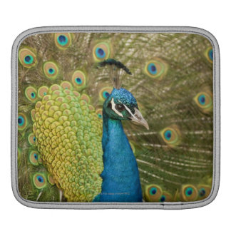 Peacock strutting iPad sleeve