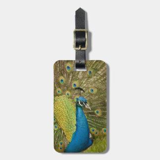 Peacock strutting luggage tag