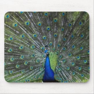 Peacock Strutting Mouse Mat