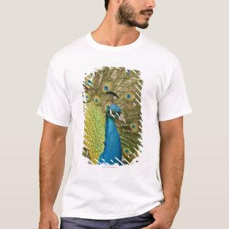 Peacock strutting T-Shirt