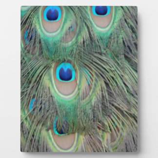 Peacock Tail Feather Large Eyes Plaque