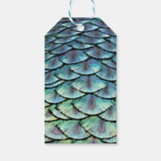 Peacock Tail Feathers Gift Tags