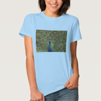 Peacock Tee Shirts
