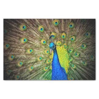 Peacock Tissue Paper