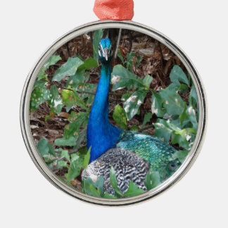 Peacock Under A magnolia Tree Christmas Ornament