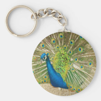 Peacock up close basic round button key ring