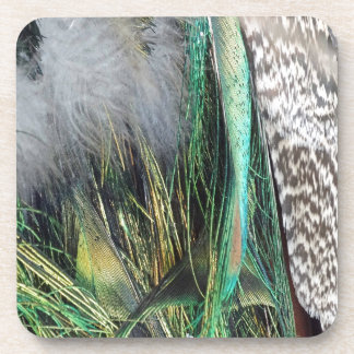 Peacock With New Feather Growth Coaster