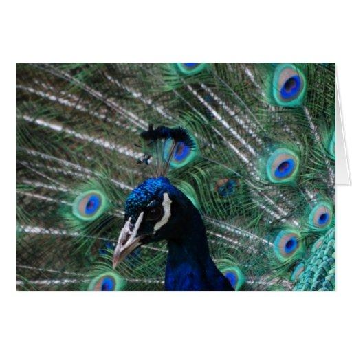 Peafowl Bird Greeting Card