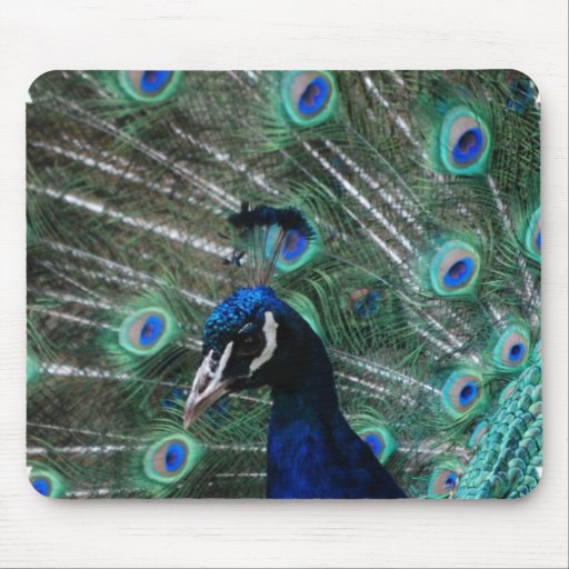 Peafowl Bird Mouse Pad