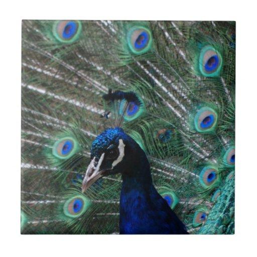 Peafowl Bird Tile