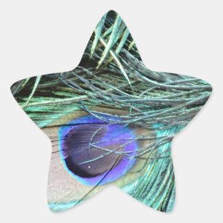 Peafowl Feather Eye Star Sticker