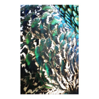 Peafowl Feathers Brilliant Colors Stationery