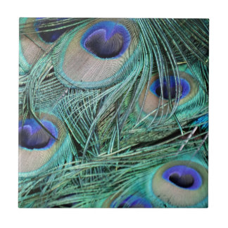 Peafowl Feathers Green And Blue Eyes Tile