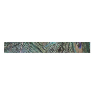 Peafowl Feathers Grosgrain Ribbon