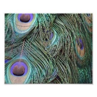 Peafowl Feathers Photo Print
