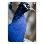Peafowl Greeting Card