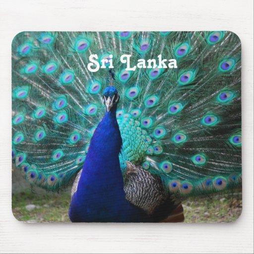 Peafowl in Sri Lanka Mouse Pad