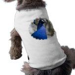 Peafowl Pet Shirt